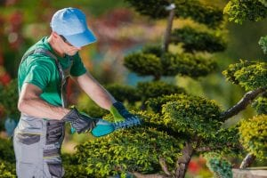 How to Choose the Best Landscaper Near Me1