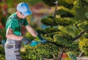 What are the Benefits of Hiring a Landscaping Contractor Near Me1